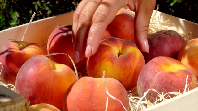 Hand takes ripe juicy peach from a wooden box Female hand takes ripe juicy peach from a wooden box peach stock videos & royalty-free footage