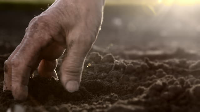SLO MO Hand tiling the soil Slow motion close camera stabilization shot of farmer's hand tiling the soil on the field. Also available in 4K resolution. dirt stock videos & royalty-free footage