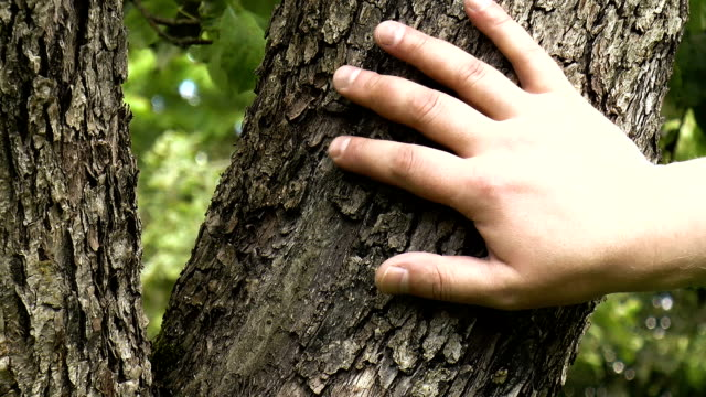 hand touches the tree - wood texture filmów i materiałów b-roll
