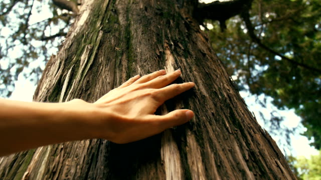 Hand touching a tree trunk in the forest