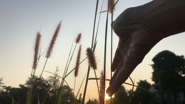 Hand touching flowers , sunbeam background