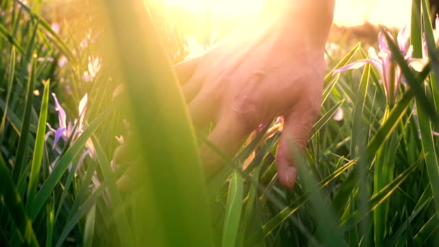 vídeos de stock e filmes b-roll de hand touching grass with sunlight - hand