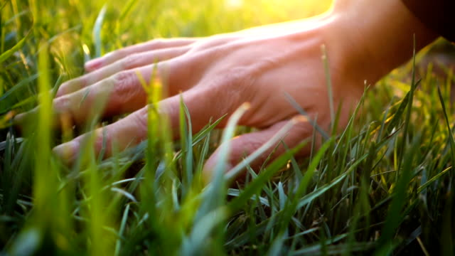 hand touching grass,feeling nature - grass stock videos & royalty-free footage