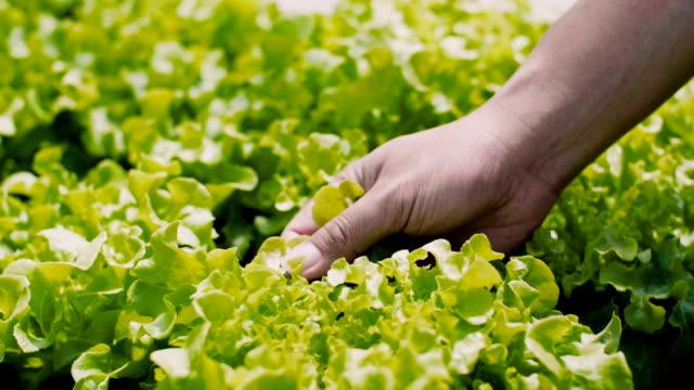 cu: 手の温室で植物に触れる - ローフード点の映像素材/bロール