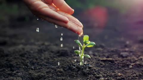 irrigazione a mano di una giovane pianta - accudire video stock e b–roll