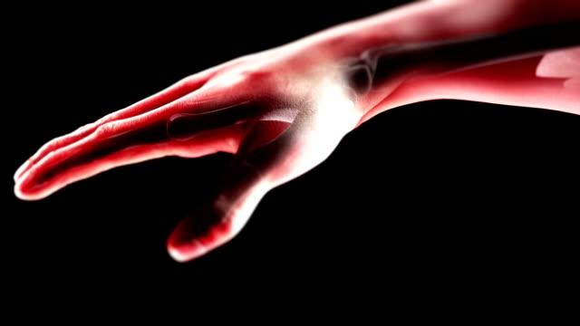 ręka z kości pętli - skóra część ciała filmów i materiałów b-roll