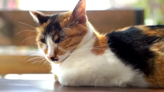 handheld shot of sleeping cat with people moving in background - кошка смешанной породы стоковые видео и кадры b-roll