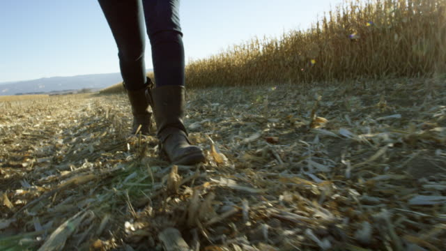 Handheld Shot of Young Woman with Boots Walking through a Corn Field at Harvest Under a Clear, Blue Sky with Mountains in the Background in Western, Colorado at Sunset