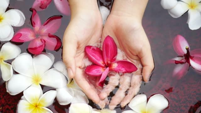 vídeos de stock e filmes b-roll de hands carefully holding flowers - mulher natureza flores e piscina