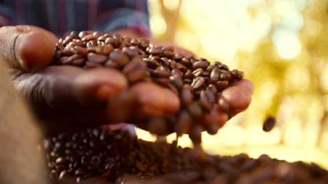 Hands holding freshly roasted aromatic coffee beans video