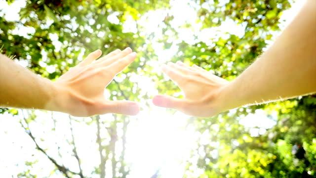 mani davanti agli alberi con il sole. - braccio umano video stock e b–roll