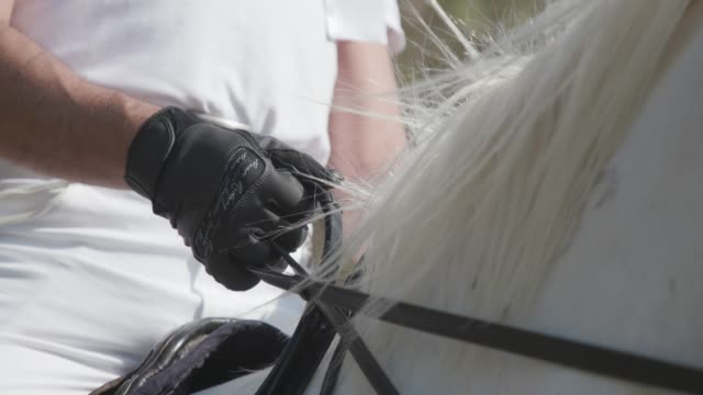 Hands in gloves holding reins of white horse