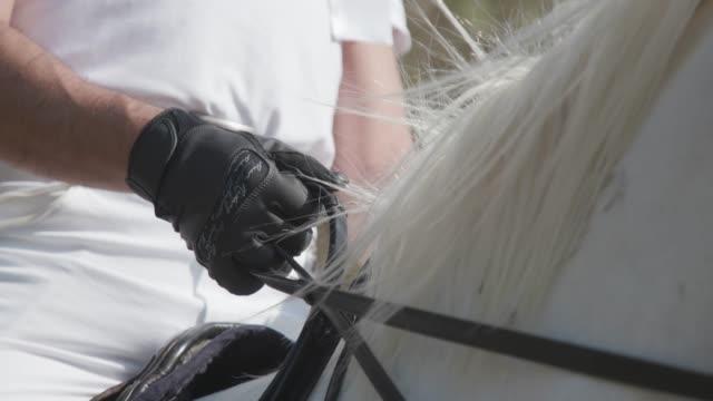 白い馬の手綱を保持している手袋の手 - 動物に乗る点の映像素材/bロール