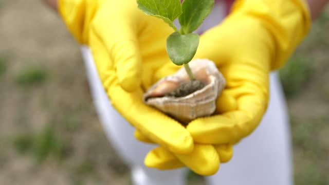 stockvideo's en b-roll-footage met handen in gele handschoenen houden een jonge plant - fresh start yellow