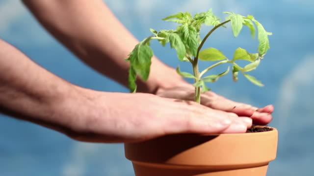 Hands nurturing potted plant video