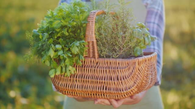 vídeos de stock e filmes b-roll de hands of a farmer holding a basket of greens and spices - manjericão