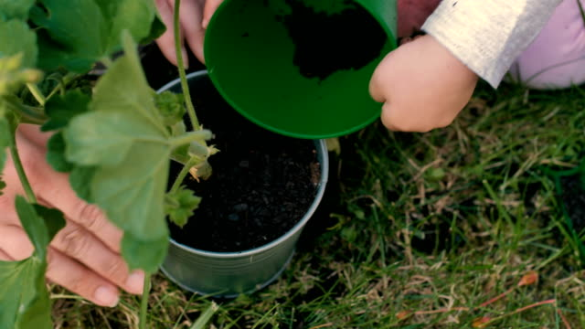 Hands of a little girl planting flower outdoors