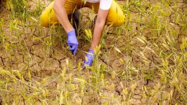 vídeos de stock, filmes e b-roll de mãos de ecologistas, levando a amostra de solo - amostra científica
