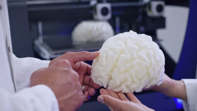 Hands of male and female biomedical engineer discussing the 3D brain model in their hands by the 3D printer