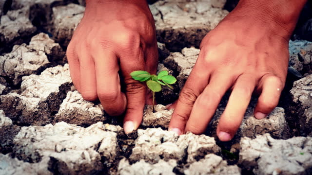 Hands plant green seed video