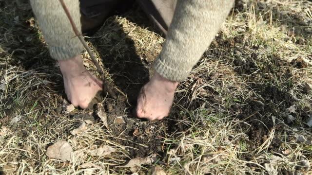 Hände Pflanzen Baum in-Gras Feuchtgebiet – Video