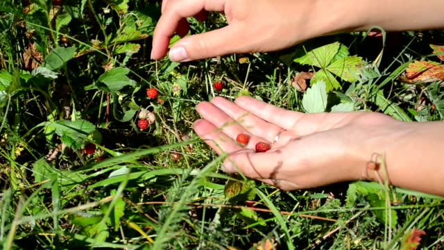 hands wild strawberry video