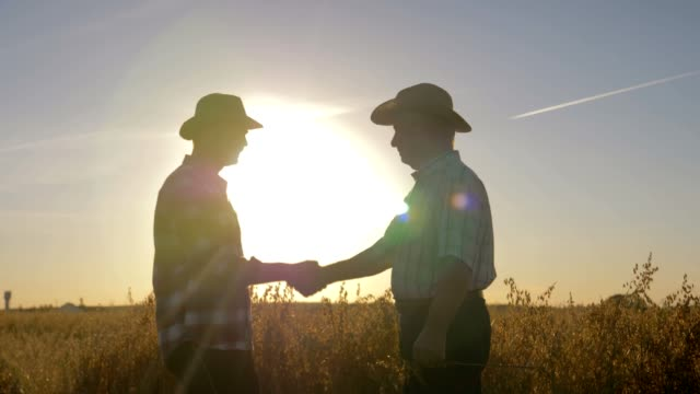 handshake of farmer and worker in hat in agricultural field background sunset - ранчо стоковые видео и кадры b-roll