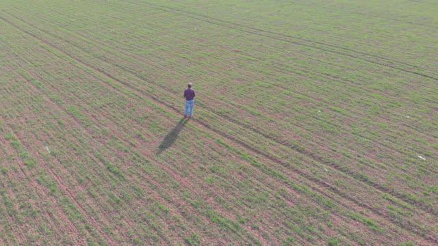 stilig vuxen bonde på sin vete frö planta jordbruks området i början av våren. utsikt från luften. - single pampas grass bildbanksvideor och videomaterial från bakom kulisserna