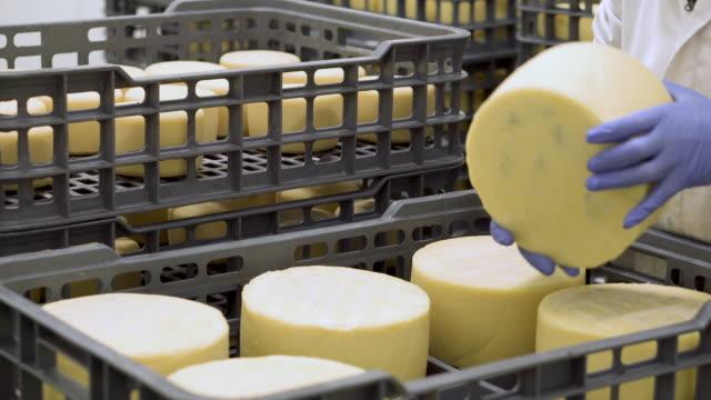 handsome ost kontrollerar ostar smaksättning på mejeri fabrik i 4k uhd-video. - livsmedelstillverkningsfabrik bildbanksvideor och videomaterial från bakom kulisserna