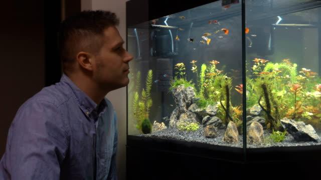 yakışıklı adam evde akvaryum balık bakıyor. - akvaryum stok videoları ve detay görüntü çekimi