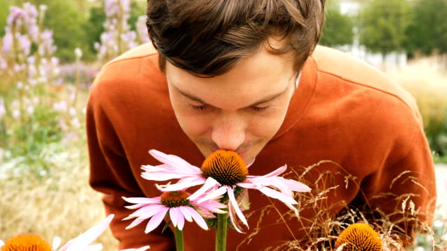 handsome man with brown hair sniffs beautiful echinacea handsome man with brown hair sniffs beautiful pink and yellow echinacea flower among wide field close view slow motion smelling stock videos & royalty-free footage