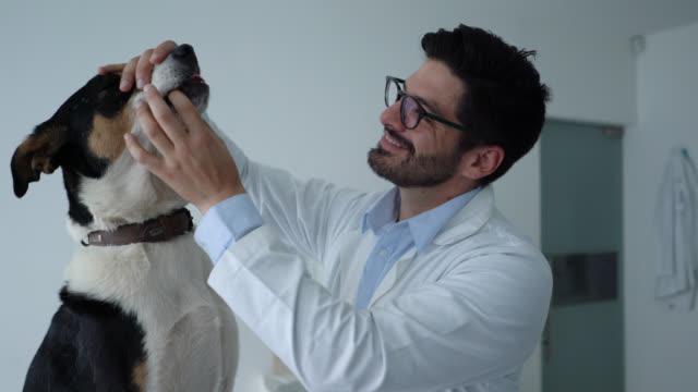 stilig veterinarian inskrivning en blandad skapa hund under en konsultera - veterinär bildbanksvideor och videomaterial från bakom kulisserna
