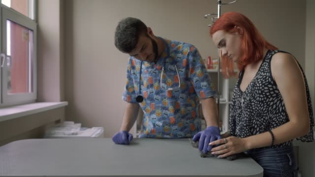 ハンサムな獣医がストロークし、テーブルの上の子猫を検査 - ネコ科点の映像素材/bロール