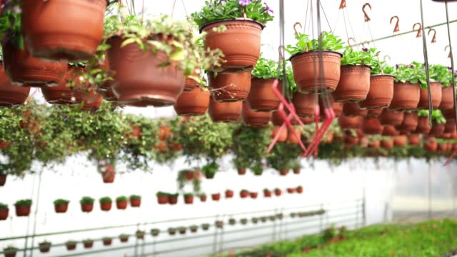 Hanging Pots in Greenhouse Hanging pots and blossoming flowers on floor in beautiful greenhouse, without people potted plant stock videos & royalty-free footage