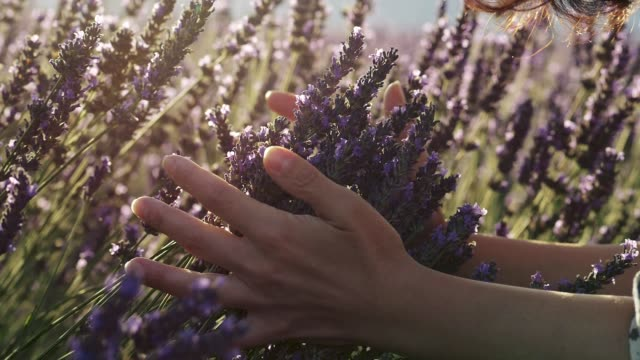 happiness concept. a young woman gently holding lavender flowers in her hands and smelling the purple flowers during a bright sunny day. slow motion shot - stan naturalny filmów i materiałów b-roll