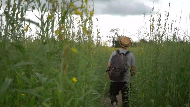 lyckliga och glada manliga turist backpacker med hatt och väska upphetsat promenader och hoppning på landsbygden gräsmark - single pampas grass bildbanksvideor och videomaterial från bakom kulisserna