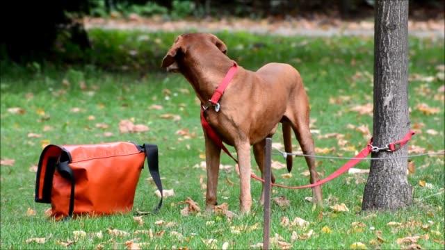 happy and loyal dog in a park in berlin charlottenburg, germany - affidabilità video stock e b–roll