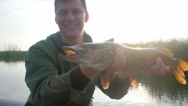 happy angler holds the northern pike fish - lega sportiva amatoriale video stock e b–roll