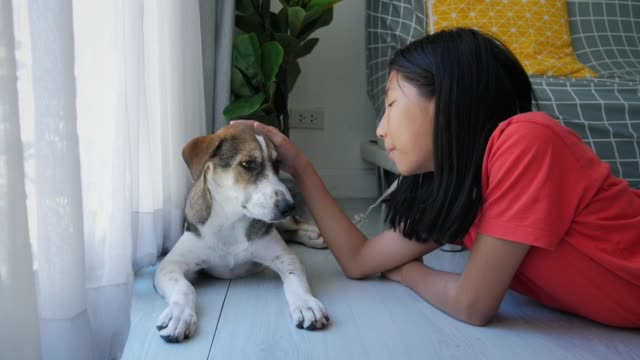 Happy Asian girl touching and playing with his dog near window at home.