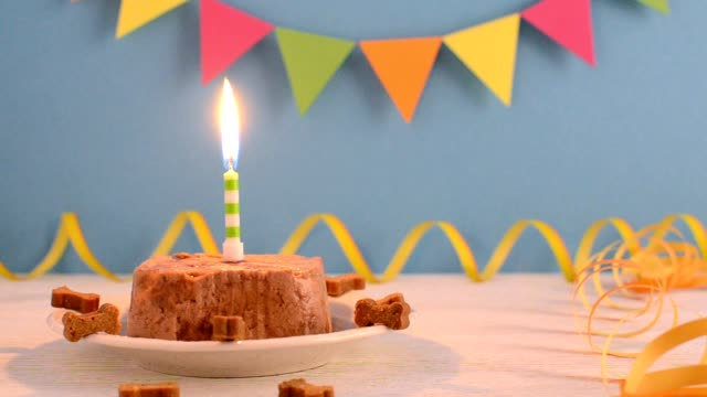 vídeos de stock e filmes b-roll de happy birthday cake for dog from wet food and treats with candle on blue party background - bolo de bolacha