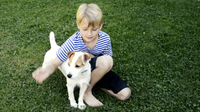 happy blond boy playing with jack russell terrier pet dog on the lawn. - terrier video stock e b–roll