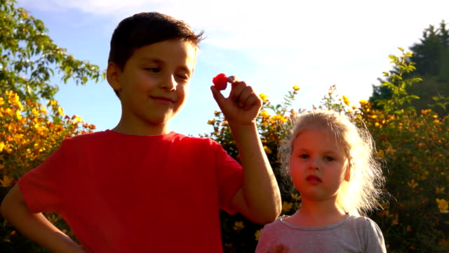 Happy boy and little girl are eating red juicy raspberries - video