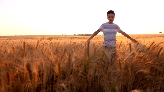 happy boy turns around with hands aside on a wheat field in a summer in slo-mo - solo bambini maschi video stock e b–roll
