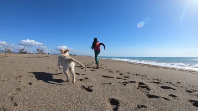 happy boy wit her dog running at the beach - bambino cane video stock e b–roll