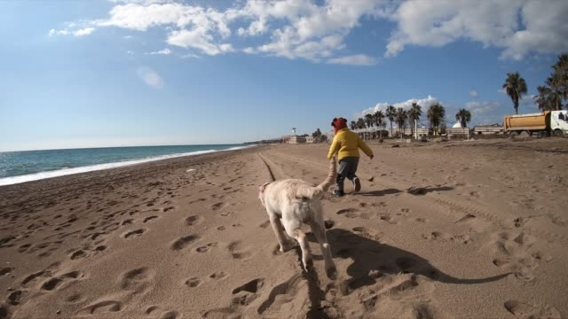 Happy boy wit her dog running at the beach Happy boy wit her dog running at the beach slow motion. following moving activity stock videos & royalty-free footage
