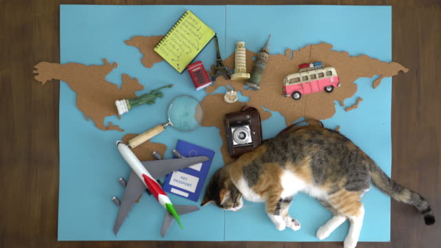 Happy cat making international travel plan on wooden desk video