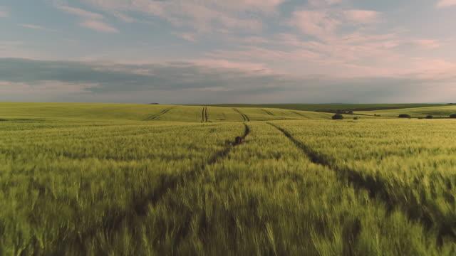 ハッピー・チャイルド農業、農業の概念。 - 希望点の映像素材/bロール