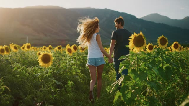Happy couple in sunflower fields - vídeo
