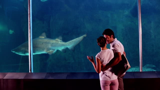 Happy couple looking at shark in the tank影片