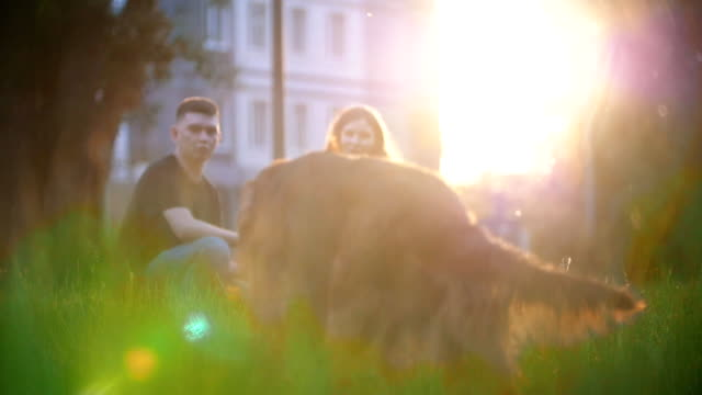 Happy couple with their dogs having a rest on the grass at summer sunset Happy couple with their dogs having a rest on the grass at summer sunset, slow motion irish setter stock videos & royalty-free footage